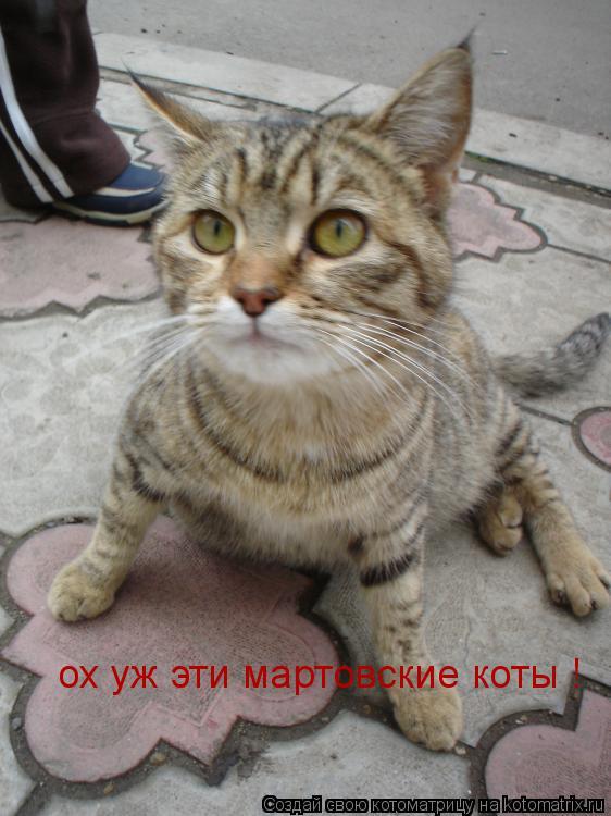 Котоматрица: ох уж эти мартовские коты !