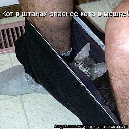 Котоматрица: Кот в штанах опаснее кота в мешке!