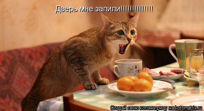 Котоматрица: Дверь мне запили!!!!!!!!!!!!!!