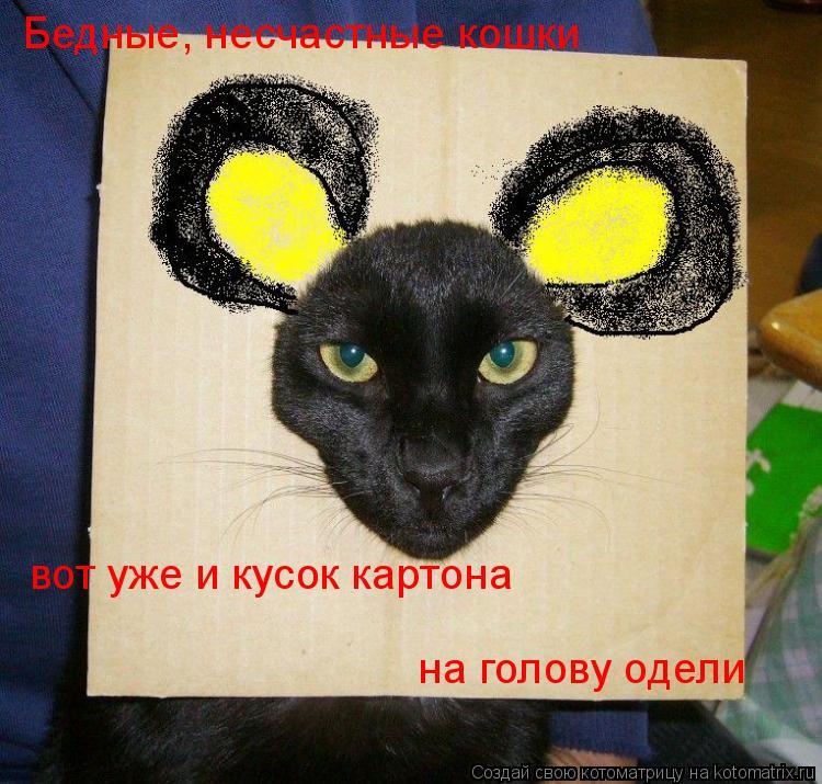 Котоматрица: Бедные, несчастные кошки вот уже и кусок картона на голову одели