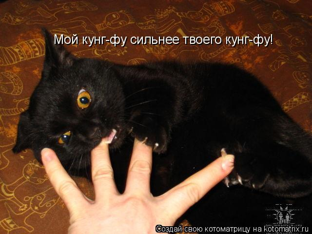 Котоматрица: Мой кунг-фу сильнее твоего кунг-фу!