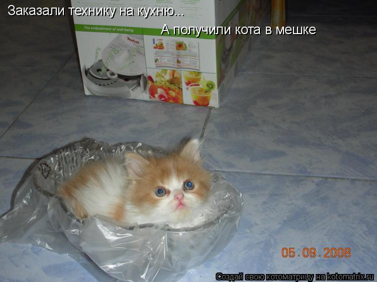 Котоматрица: Заказали технику на кухню... А получили кота в мешке