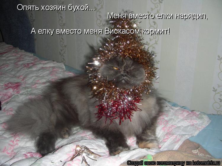 Котоматрица: Опять хозяин бухой... Меня вместо елки нарядил, А елку вместо меня Вискасом кормит!