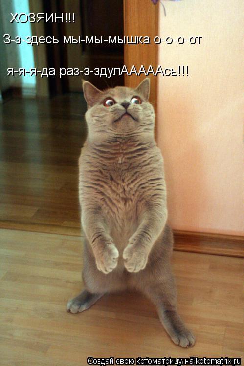 Котоматрица: ХОЗЯИН!!! З-з-здесь мы-мы-мышка о-о-о-от я-я-я-да раз-з-здулАААААсь!!!
