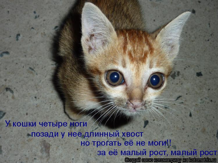 Котоматрица: У кошки четыре ноги позади у нее длинный хвост за её малый рост, малый рост но трогать её не моги!!