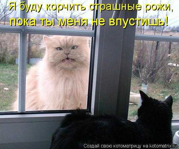 Котоматрица: Я буду корчить страшные рожи,  пока ты меня не впустишь!