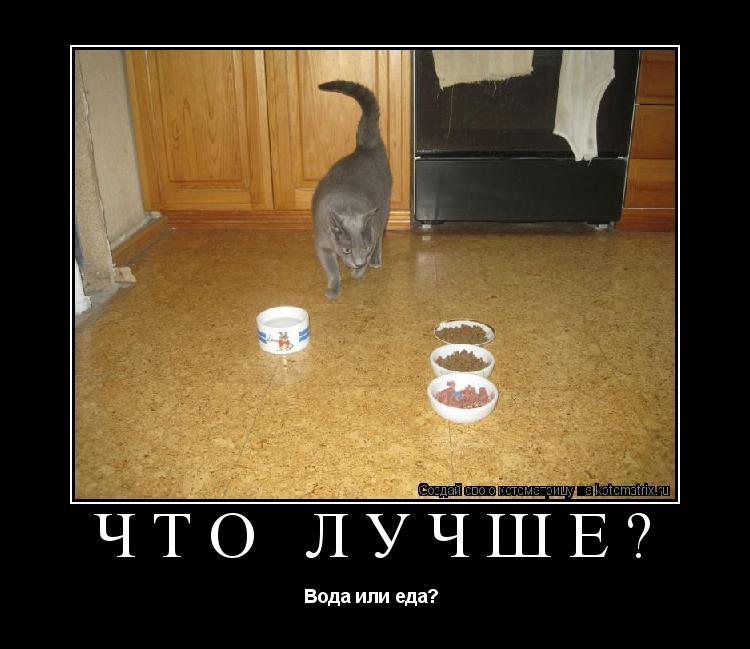 Котоматрица: Что лучше? Вода или еда?