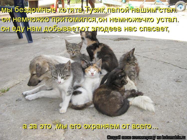 Котоматрица: мы бездомные котята,Тузик,папой нашим стал. он немножко притомился,он немножечко устал. он еду нам добывает,от злодеев нас спасает, а за это