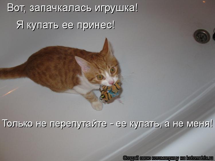 Котоматрица: Вот, запачкалась игрушка! Я купать ее принес! Только не перепутайте - ее купать, а не меня!