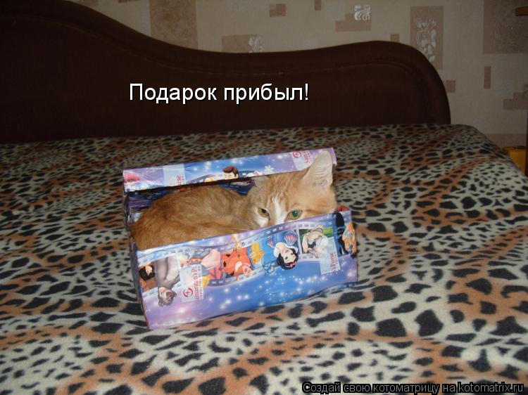 Котоматрица: Подарок прибыл!