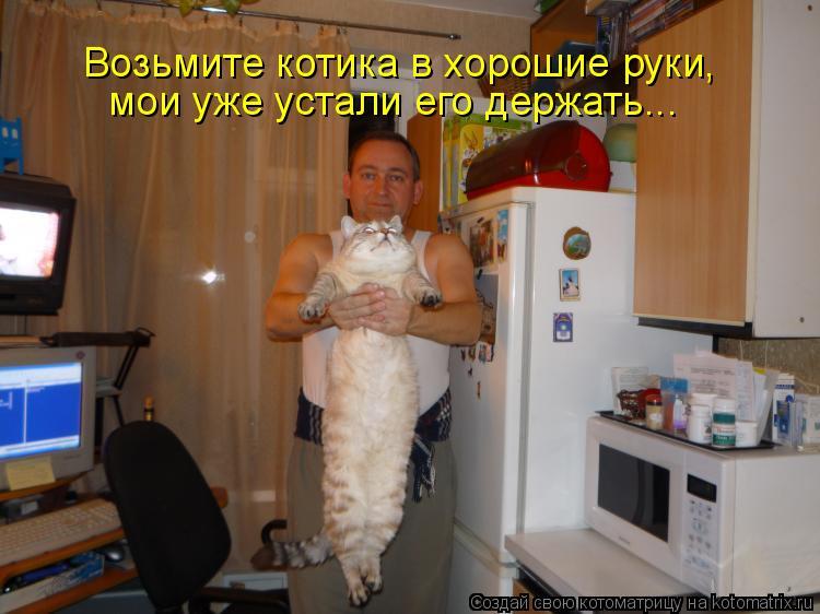 Котоматрица: Возьмите котика в хорошие руки,  мои уже устали его держать...