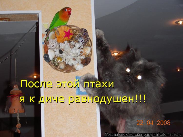 Котоматрица: После этой птахи я к диче равнодушен!!!