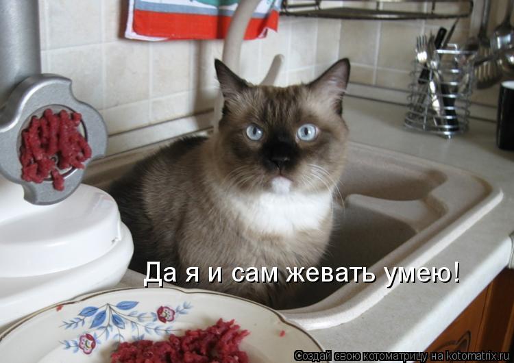Котоматрица: Да я и сам жевать умею!