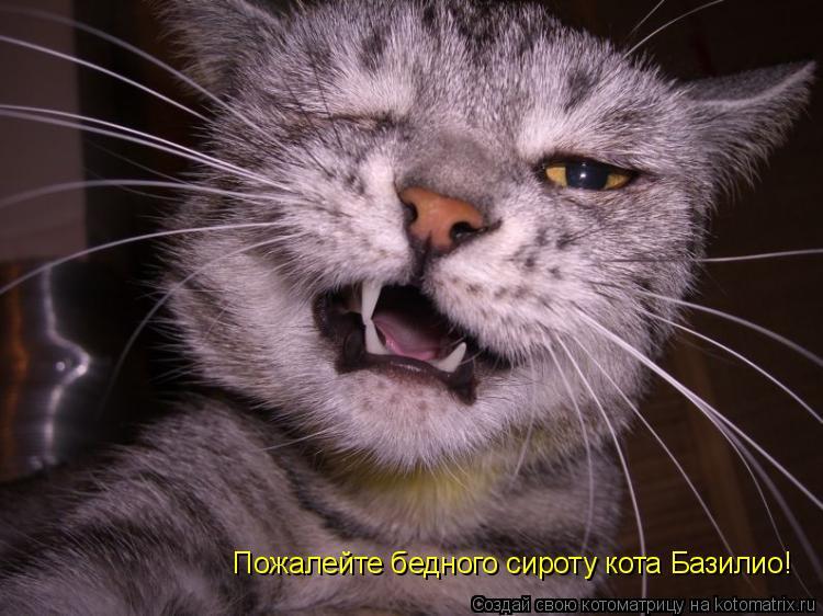 Котоматрица: Пожалейте бедного сироту кота Базилио!