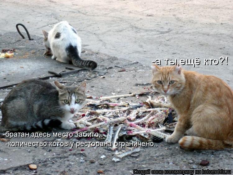 Котоматрица: -а ты,ещё кто?! -братан,здесь место забито.. -количество котов у ресторана ограничено..