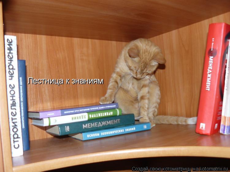 Котоматрица: Лестница к знаниям