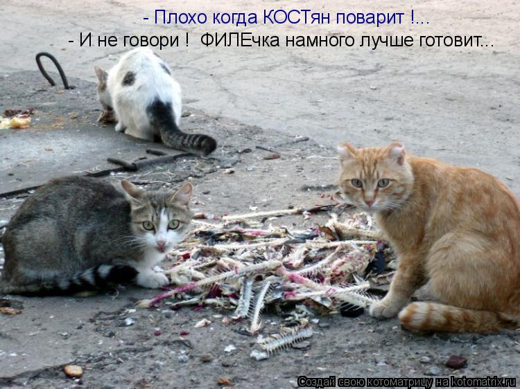 Котоматрица: - Плохо когда КОСТян поварит !... - И не говори !  ФИЛЕчка намного лучше готовит...