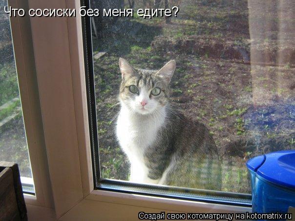 Котоматрица: Что сосиски без меня едите?
