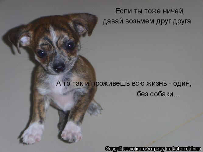 Котоматрица: Если ты тоже ничей, давай возьмем друг друга. А то так и проживешь всю жизнь - один, без собаки...