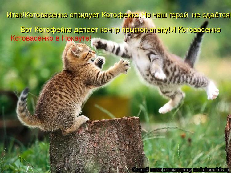Котоматрица: Итак!Котовасенко откидует Котофейко.Но наш герой  не сдаётся! Вот Котофейко делает контр прыжок-атаку!И Котовасенко Котовасенко в Нокауте!