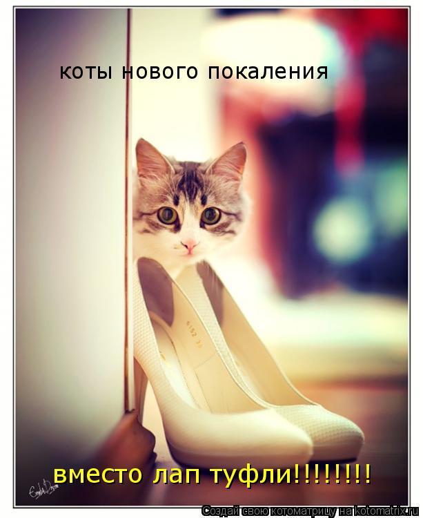 Котоматрица: коты нового покаления вместо лап туфли!!!!!!!!