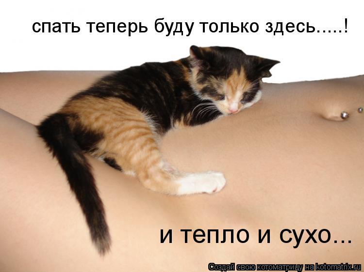 Котоматрица: спать теперь буду только здесь.....! и тепло и сухо...