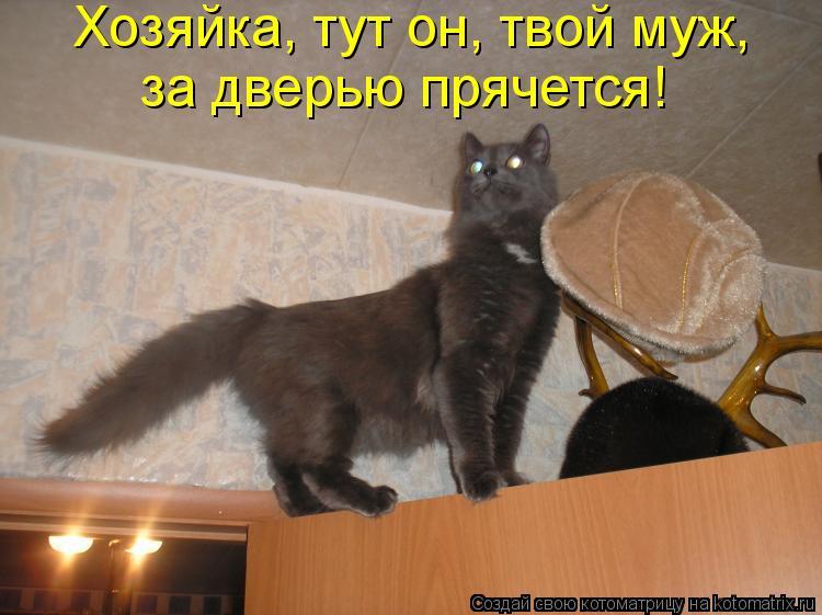 Котоматрица: Хозяйка, тут он, твой муж,  за дверью прячется!