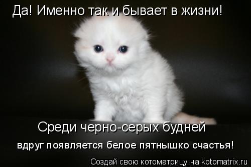 Котоматрица: Да! Именно так и бывает в жизни! Среди черно-серых будней вдруг появляется белое пятнышко счастья!