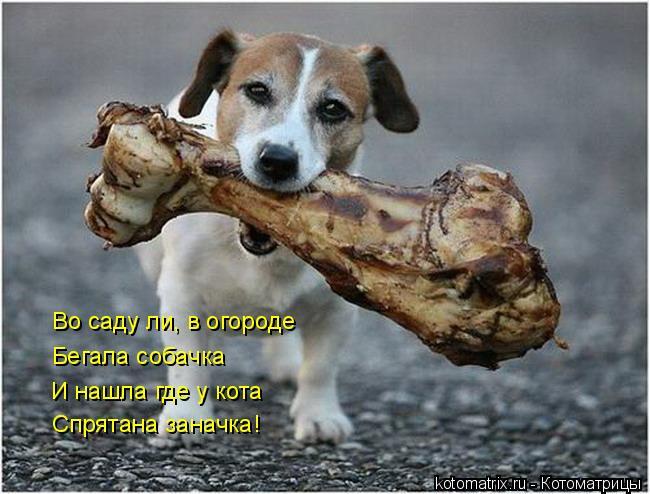 Котоматрица: Во саду ли, в огороде Бегала собачка И нашла где у кота Спрятана заначка!