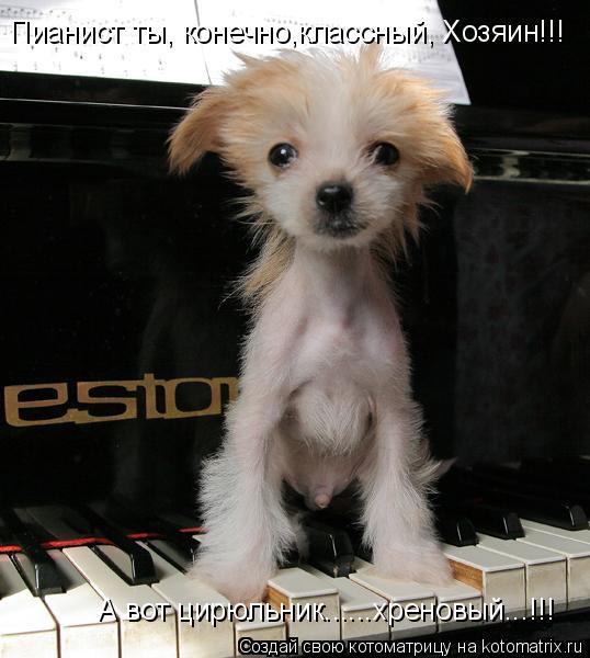 Котоматрица: Пианист ты, конечно,классный, Хозяин!!!     А вот цирюльник......хреновый...!!!