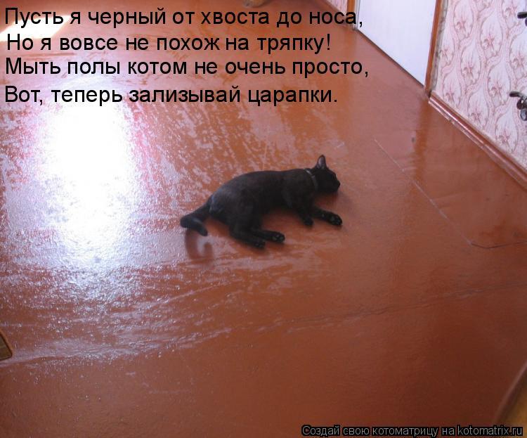 Котоматрица: Вот, теперь зализывай царапки. Пусть я черный от хвоста до носа, Мыть полы котом не очень просто, Но я вовсе не похож на тряпку!