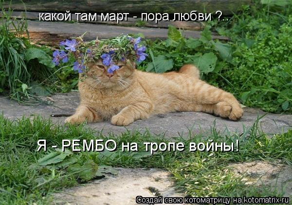 Котоматрица: Я - РЕМБО на тропе войны! какой там март - пора любви ?..