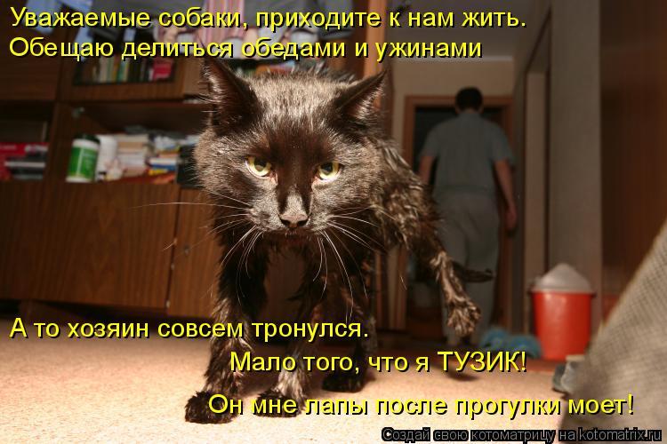 Котоматрица: Уважаемые собаки, приходите к нам жить. Обещаю делиться обедами и ужинами А то хозяин совсем тронулся. Мало того, что я ТУЗИК! Он мне лапы пос