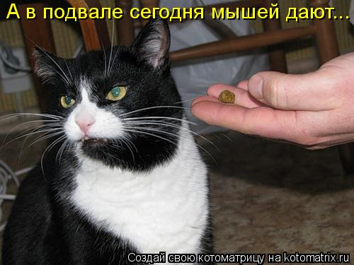 Котоматрица: А в подвале сегодня мышей дают...