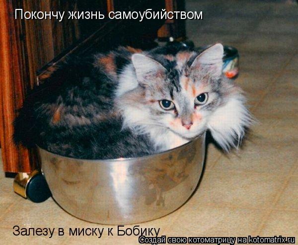 Котоматрица: Покончу жизнь самоубийством Залезу в миску к Бобику