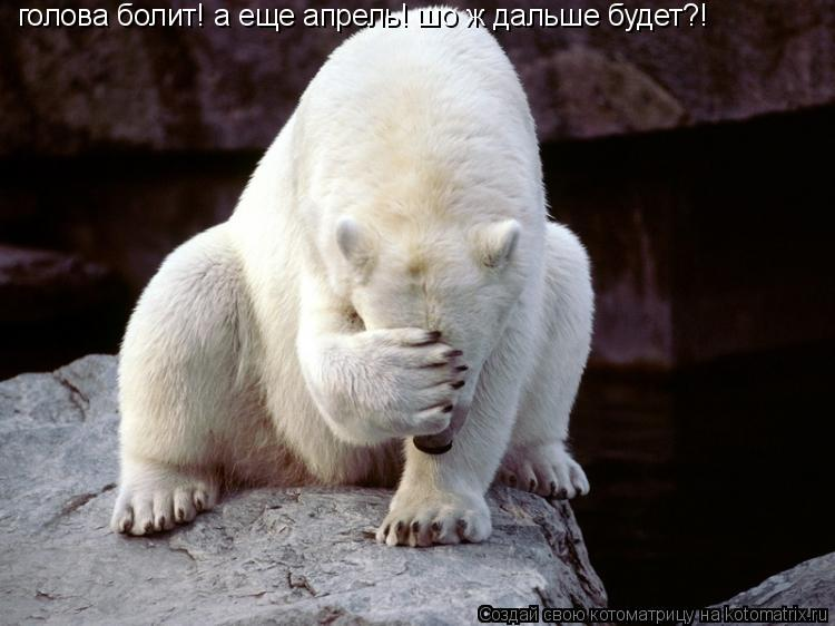 Котоматрица: голова болит! а еще апрель! шо ж дальше будет?!