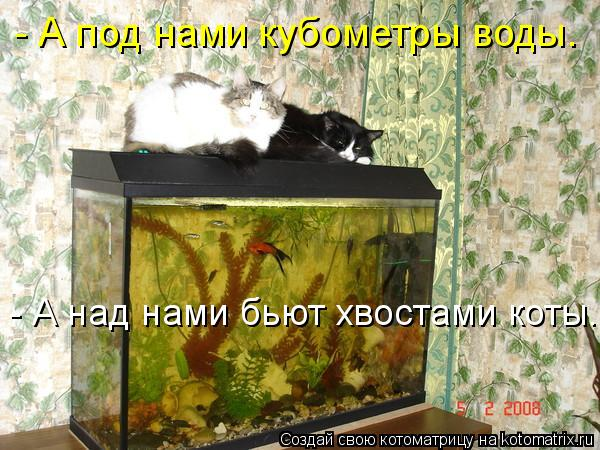 Котоматрица: - А под нами кубометры воды.  - А над нами бьют хвостами коты.