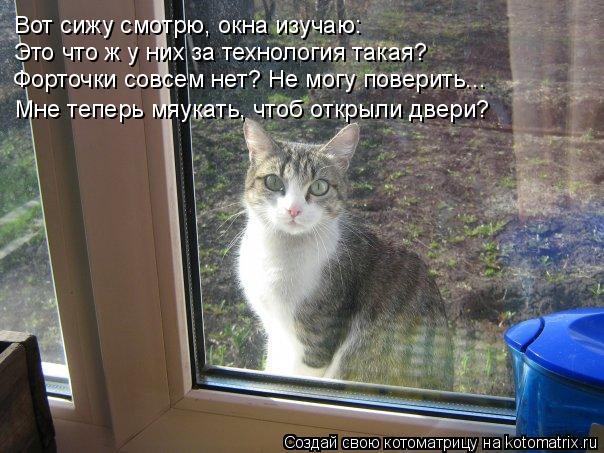 Котоматрица: Вот сижу смотрю, окна изучаю: Вот сижу смотрю, окна изучаю: Это что ж у них за технология такая? Форточки совсем нет? Не могу поверить... Мне те
