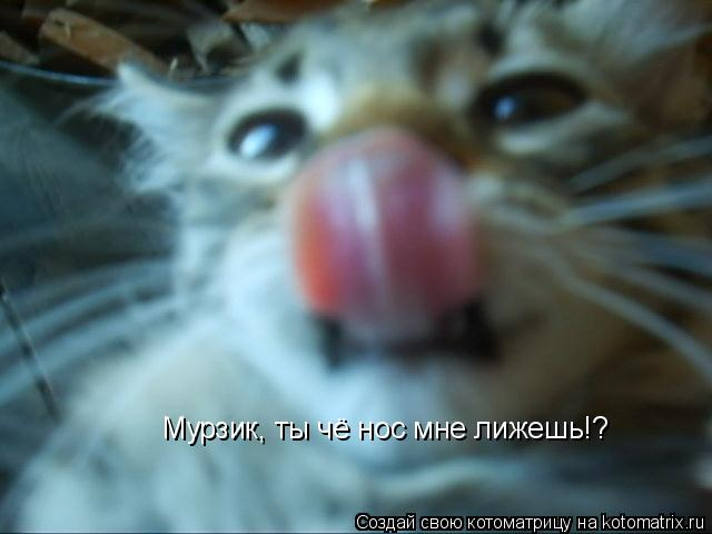 Котоматрица: Мурзик, ты чё нос мне лижешь!?