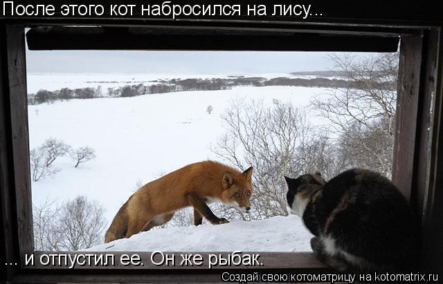 Котоматрица: После этого кот набросился на лису... ... и отпустил ее. Он же рыбак.