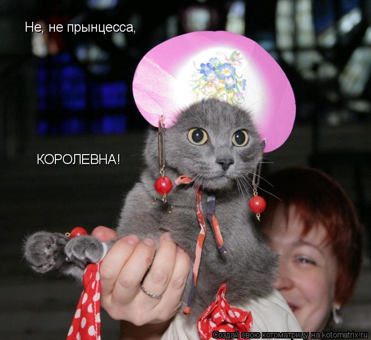 Котоматрица: Не, не прынцесса,  КОРОЛЕВНА!
