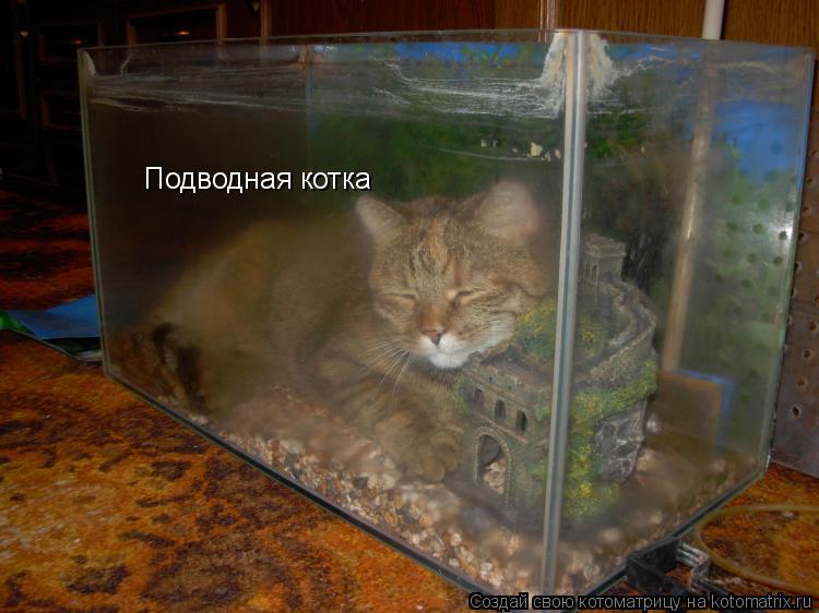 Котоматрица: Подводная котка