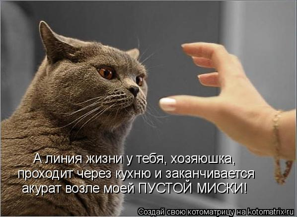 Котоматрица: проходит через кухню и заканчивается А линия жизни у тебя, хозяюшка, акурат возле моей ПУСТОЙ МИСКИ!