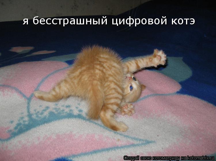 Котоматрица: я бесстрашный цифровой котэ