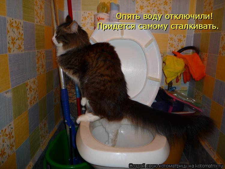 Котоматрица: Опять воду отключили! Придется самому сталкивать.