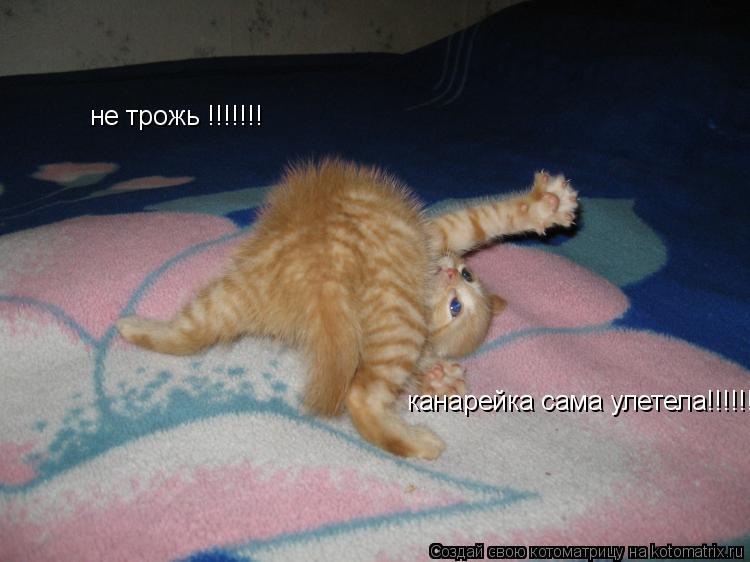 Котоматрица: не трожь !!!!!!! канарейка сама улетела!!!!!!!!!