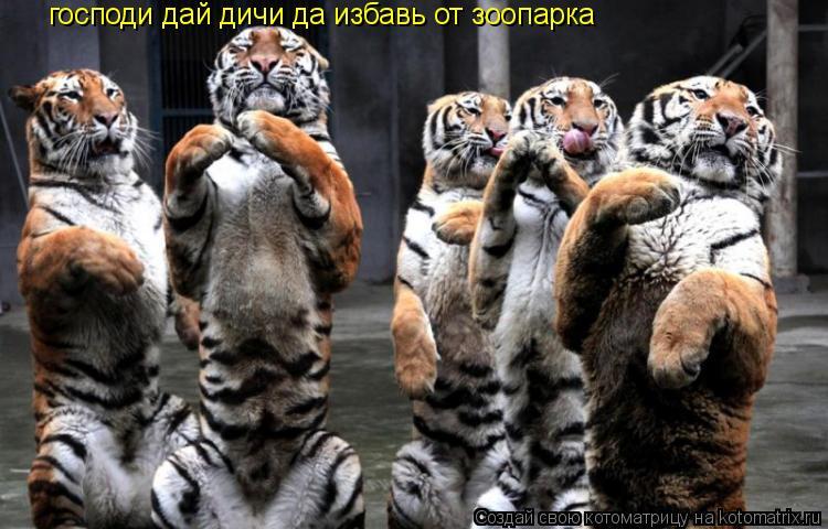 Котоматрица: господи дай дичи да избавь от зоопарка
