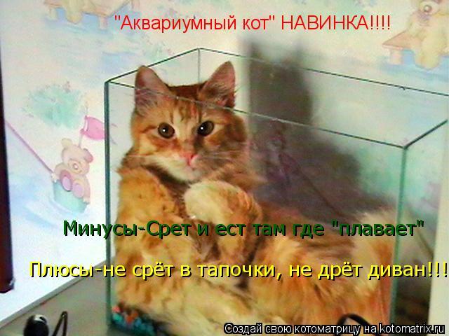 """Котоматрица: """"Аквариумный кот"""" НАВИНКА!!!!  Минусы-Срет и ест там где """"плавает""""  Плюсы-не срёт в тапочки, не дрёт диван, колбасу со стола не тырит!!! Плюсы-не с"""