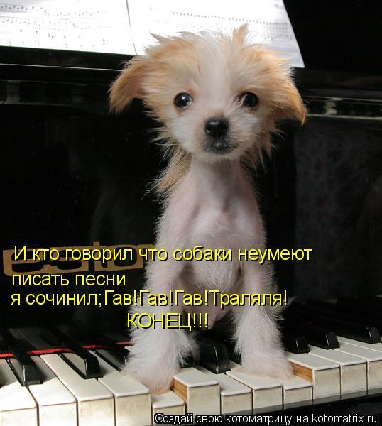 Котоматрица: И кто говорил что собаки неумеют писать песни  я сочинил;Гав!Гав!Гав!Траляля! КОНЕЦ!!!