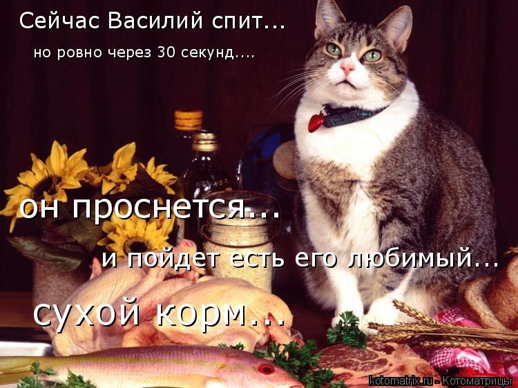 Котоматрица: Сейчас Василий спит... но ровно через 30 секунд.... он проснется... и пойдет есть его любимый... сухой корм...